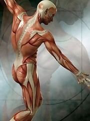 Muscles RONALD -MANUAL THERAPIST